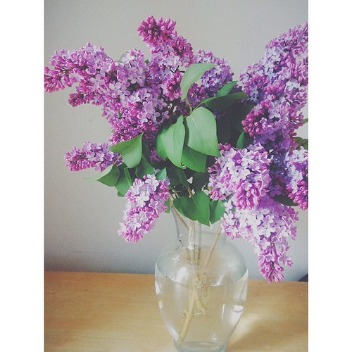 Lilacs.  Are you sick of them yet?  Me either.  #vscocam #squaready