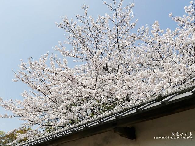 20140327山陽D2熊本-1130017