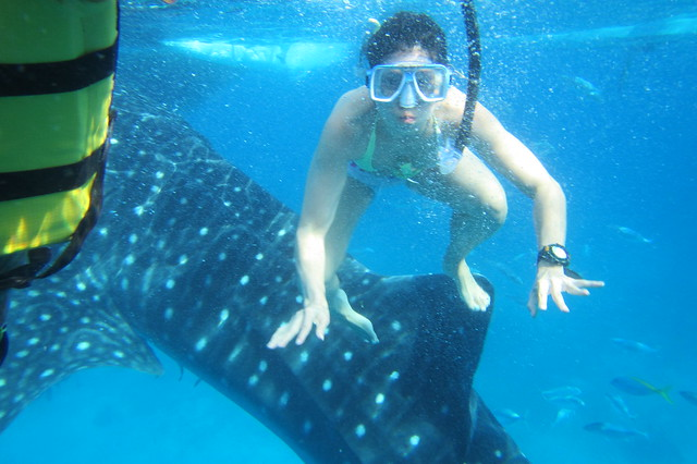 whale shark as a surf board