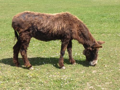 Chenonceau donkey