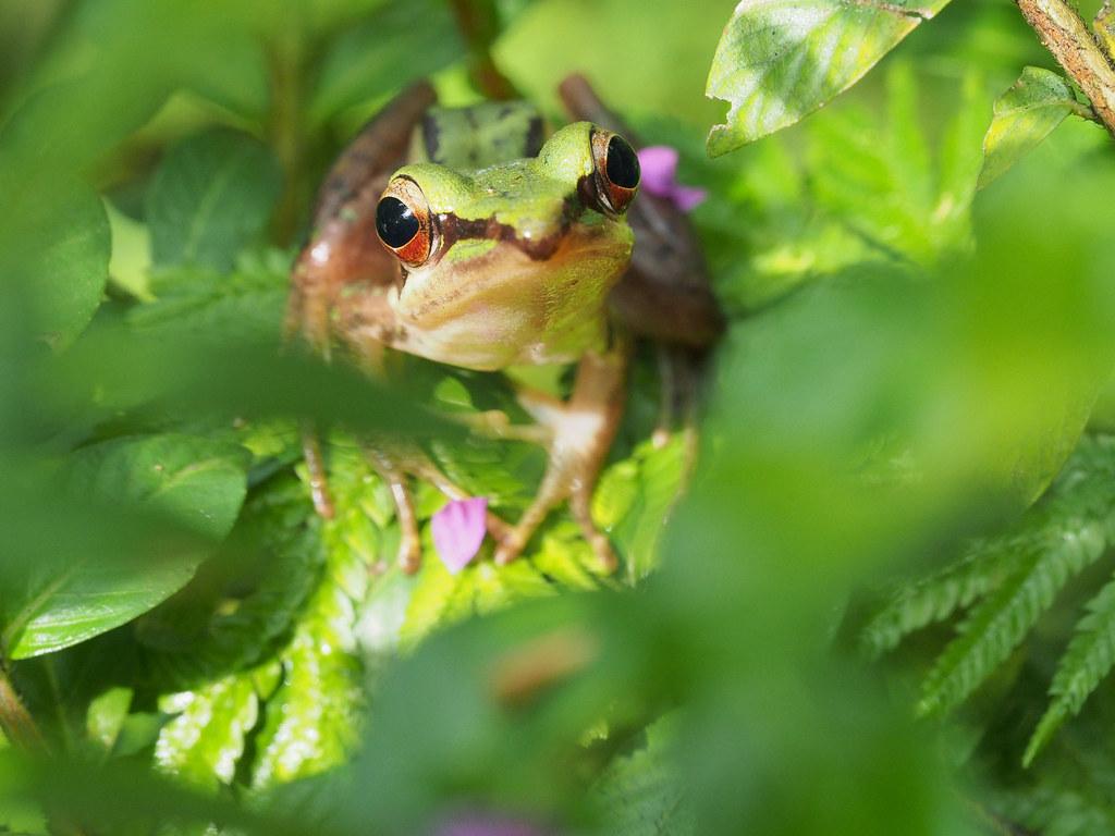 随着我的镜头潜入灌木中 As my lens sneak into the shrubs