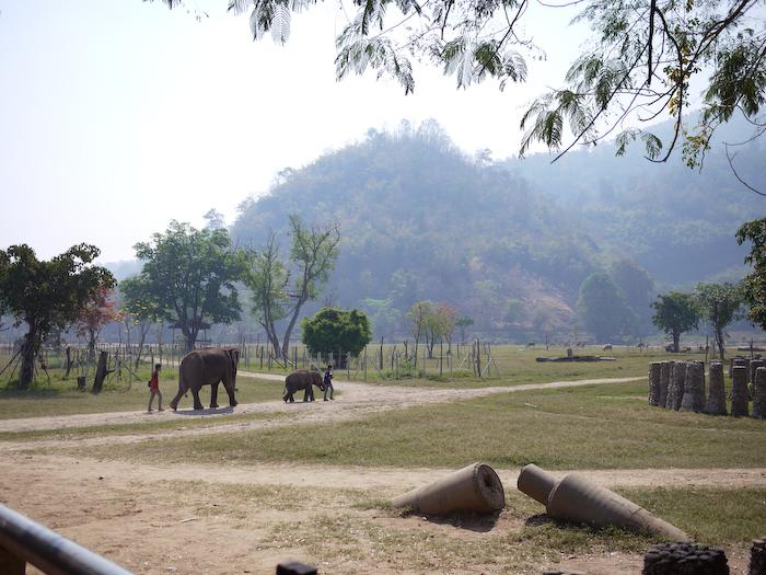 Elephant Nature Park Chiang Mai-3