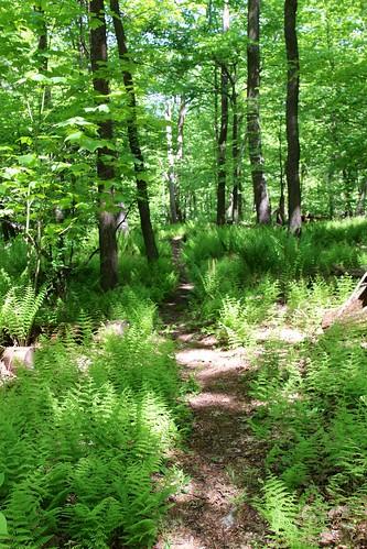 statepark fern pennsylvania trail blueknob mountainviewtrail