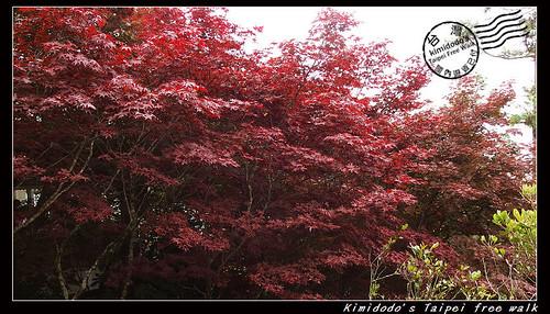 太平山 (8)