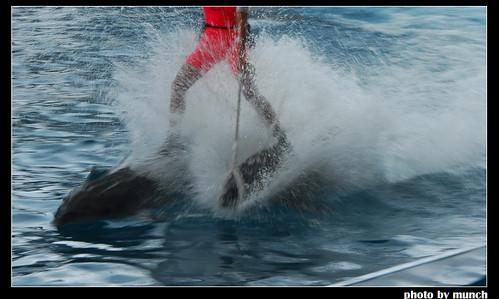 與海豚天性無關的「適性展示」,圖片來源:Munch