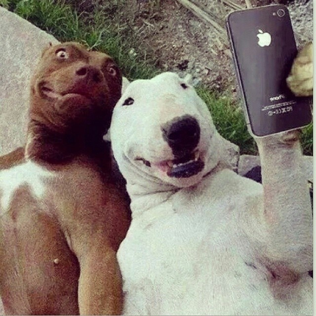 #selfie this is funny!
