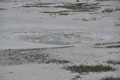 Seaweed Spring (2 June 2013) 3