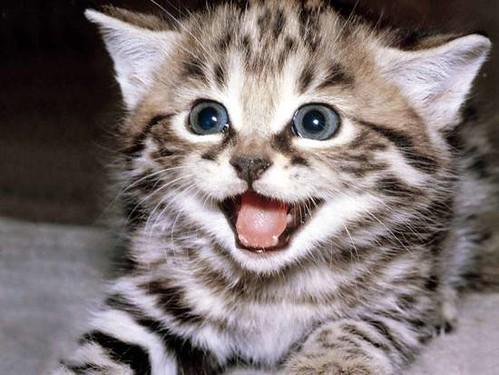 gatto ride
