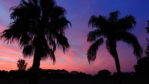 morning pink blue red wallpaper sky sun color tree weather silhouette clouds sunrise landscape dawn nikon flickr neon florida palm coolpix bradenton p510 mullhaupt jimmullhaupt