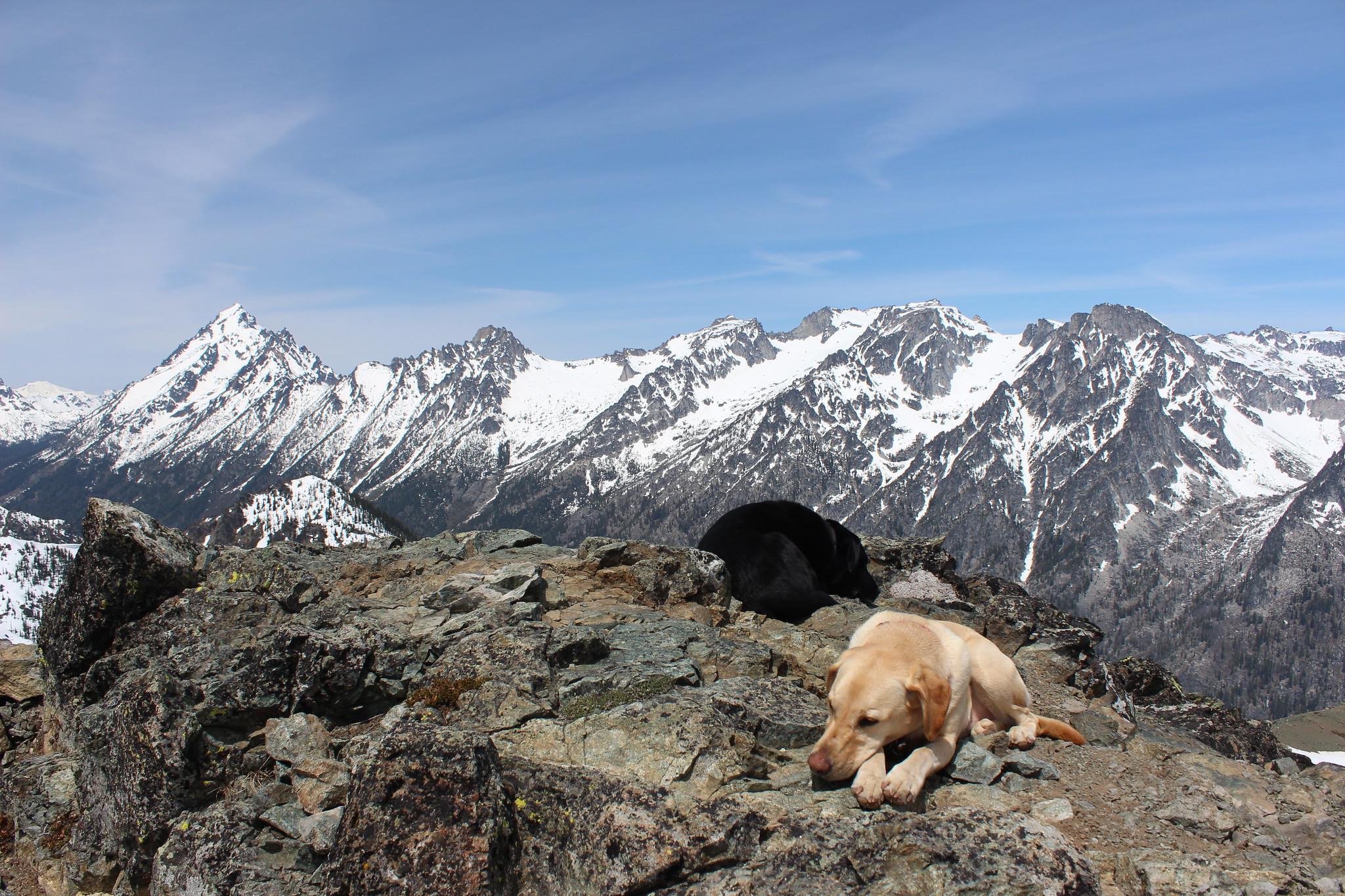 Summit dogs on Navaho Peak