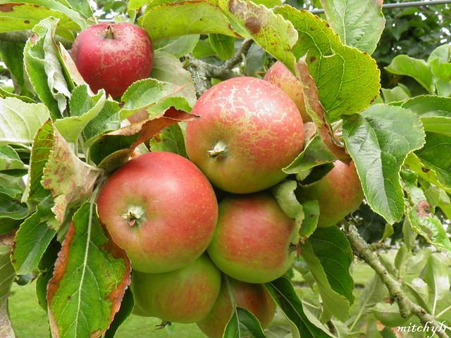 Orchard Crop