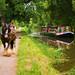 Grand Western Canal - Tiverton by petehem
