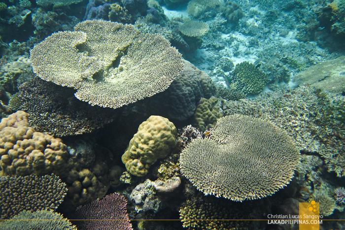 Coral Garden, Coron