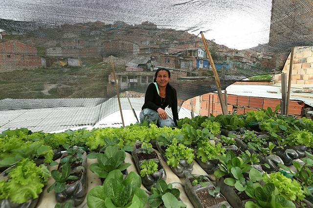 Huerta y jard n techos verdes que dan comida un proyecto for Huerto en azotea
