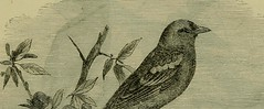 """Image from page 510 of """"Reptiles and birds : a popular account of their various orders, with a description of the habits and economy of the most interesting"""" (1883)"""