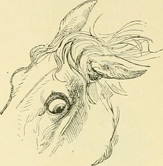 "Image from page 153 of ""The standard horse book, comprising the taming, controlling and education of unbroken and vicious horses"" (1895)"