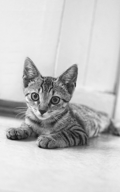 Boudoir cat photography