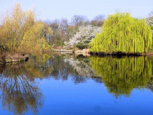 parcdeschantereines leshautesbornes etangs lacs eau oiseaux nature paysage reflets villeneuvelagarenne hautsdeseine