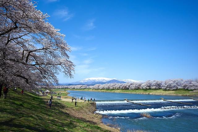 2014.04.13  一目千本桜