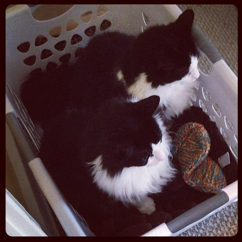 Brothers-in-a-basket. #catsofinstagram