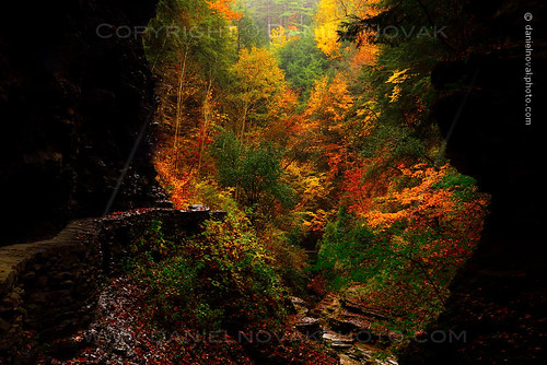 statepark autumn newyork fall nature colors print landscape outdoors photography view hiking fineart hike canvas foliage trail photograph gorge unusual watkinsglen watkinsglennewyorkunitedstatesny