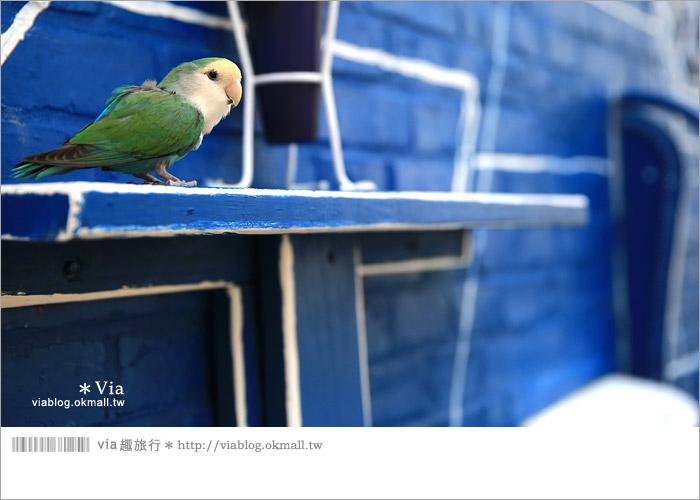 【彰化景點推薦】乳牛彩繪村(福寶村)~數百頭彩色小牛+夢幻藍晒圖的彩色村39