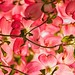86 of 365 project: Spring palette by Kunal Mehra photography