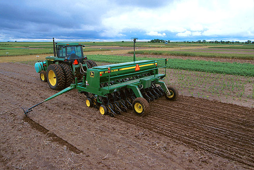 Planting foxtail millet, a summer annual forage with low water needs, helps conserve water for subsequent crops. Photo by Scott Bauer.