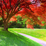 Today in Vancouver: Turning Japanese Maple Syrup