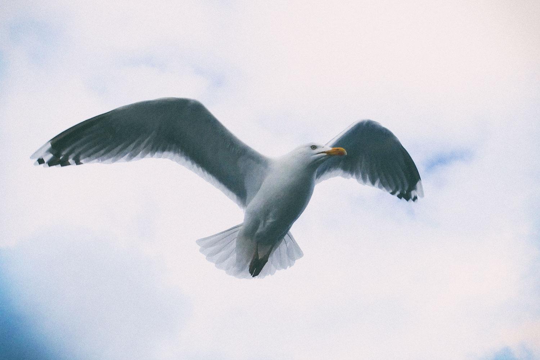 Möwenflugschau