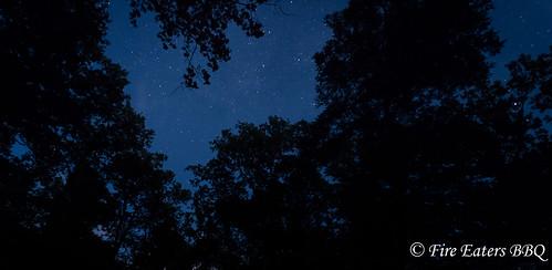 Sterne im Wald
