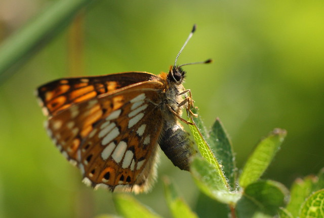 butterfly&war16