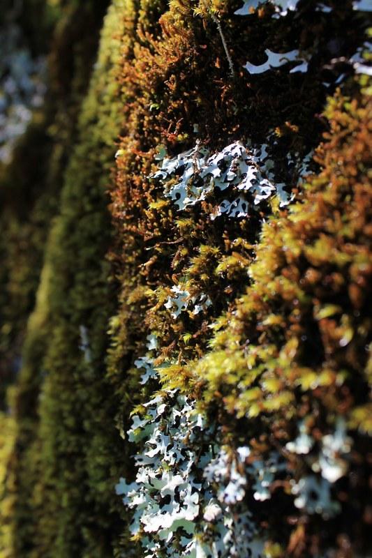 Moss in Bosque Ishinca