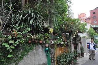 阿立的家外牆種滿綠色植物。