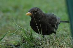 Gardens & Garden Birds 2014