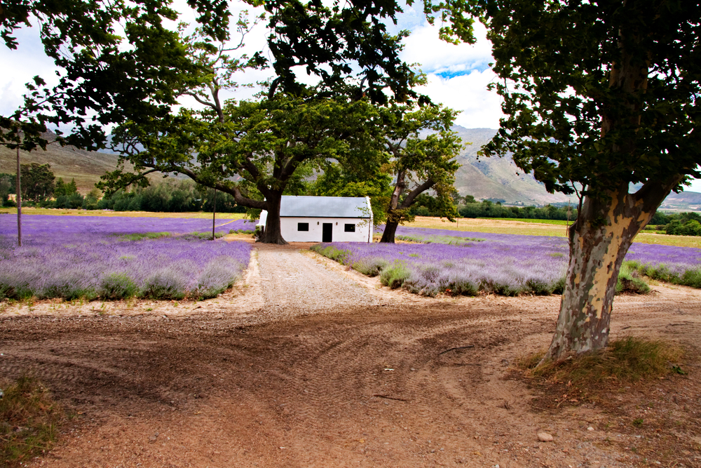 Paarl landscape, South Africa
