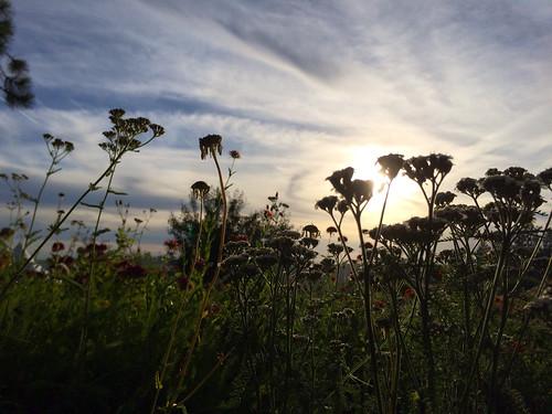 flowers light sunset sky landscape beautifuloutdoors