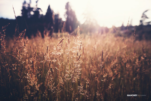 summer sun sunlight nature field canon golden dof bokeh