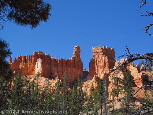 Castle-like formation from the Queen's Garden Trail in Bryce Canyon National Park, Utah