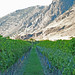 Orofino photo of vineyard and mountain
