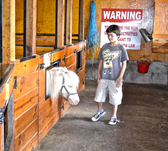 miniature horse farm lancaster county pa
