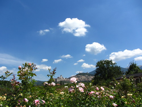 basilica from the rose garden
