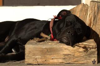 let sleeping logs lie