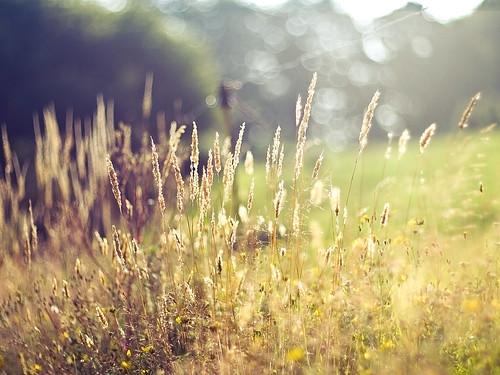 50mm licht weide frankreich europa europe bokeh f14 meadow wiese bretagne olympus pasture environment wetzlar umwelt leitz kringel manuell summiluxr e520 maëlpestivien