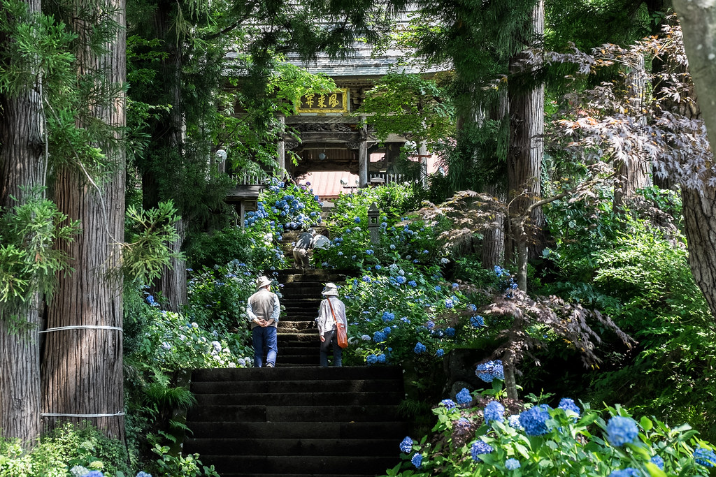 高源院と紫陽花