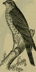 """Image from page 606 of """"Reptiles and birds : a popular account of their various orders, with a description of the habits and economy of the most interesting"""" (1883)"""