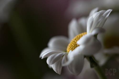 Day 91: Oops-a-daisy