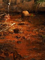 Nature couleur