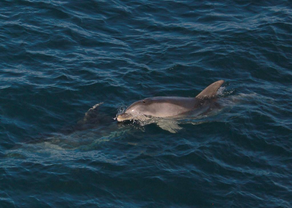 paihia-dolphin