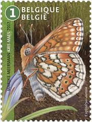 16 HAUTES FAGNES timbre i